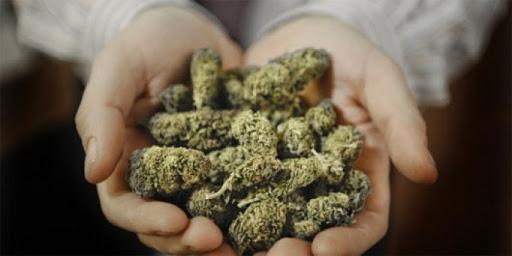Virginia Si Cannabis
