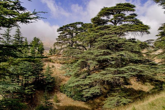 Libano Hashish