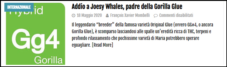 Le Cannabiste Joesy Whales
