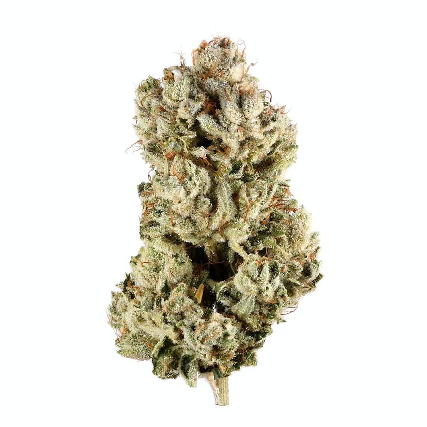 Cannabis GG4