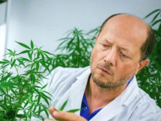 Covid Cannabis 73% Infezione